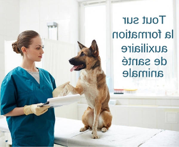 formation assistant veterinaire